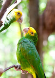 Bright large tropical parrots sit on a branch and communicate Stock Photo