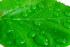 Bright leaf Royalty Free Stock Image