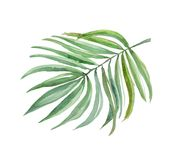 Bright leaf fern, watercolor image for use in thematic products. Good for wedding subjects. You can use in the layout of invitations, postcards an image for the Royalty Free Stock Photos