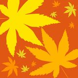 Bright leaves. Bright colored leaves in autumn Royalty Free Stock Photo