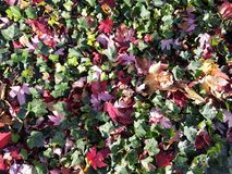 Bright leaves on the ground royalty free stock photography