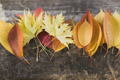 Bright leaves lying on tree in arrangement Royalty Free Stock Images