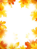 Bright leaves Royalty Free Stock Photo