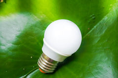 Bright LED bulb. In lotus leaf background Royalty Free Stock Images