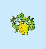 Bright lemon fruit drawing. Royalty Free Stock Photography