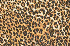 Bright leopard fur as background Stock Image