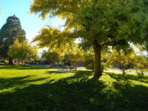 Bright Light, Dark Shadows. Light and shadow contrast each other in the Rose Park Stock Photography