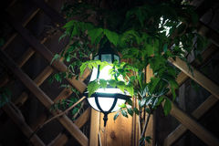 A bright light in the greenery on the wall of the gazebo. The green lantern shines bright in the evening on the wall of the gazebo Stock Photo