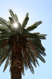 Sunlight through a palm tree in the blue sky Royalty Free Stock Photography