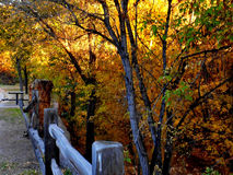 Bright Light on Yellow Leaves. A bright light shines on autumn colored trees along the Santa Fe River Royalty Free Stock Images