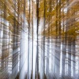 Bright light. Zoomburst of bright light in birch trees resulting in an explosion of light Stock Images