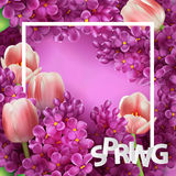 Bright lilac flowers and tulips decorative frame template Royalty Free Stock Images