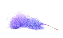 Bright  lilac ostrich's feather Stock Photo