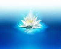 Bright lily Stock Photo