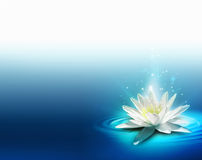 Bright lily Stock Images