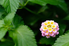 Bright little flowers. Beautiful flowers bloom in a tropical botanical garden Stock Photography