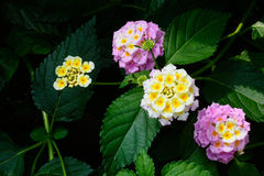 Bright little flowers. Beautiful flowers bloom in a tropical botanical garden Stock Image