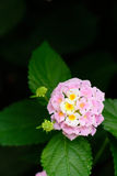 Bright little flowers. Beautiful flowers bloom in a tropical botanical garden Royalty Free Stock Photo