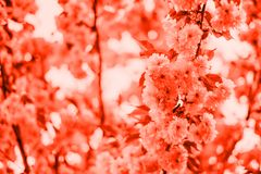 Living coral blossom background stock image