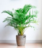Bright living room with houseplant on the floor in a wicker basket stock image