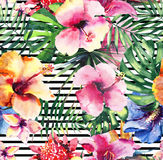 Bright lovely sophisticated wonderful tender colorful tropical hawaii floral herbal summer tropical flowers hibiscus orchids and g Stock Photos