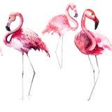 Bright lovely tender gentle sophisticated wonderful tropical hawaii animal wild summer beach pink flamingos pattern watercolor han Stock Photo
