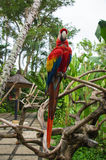 The bright macaw on a branch Royalty Free Stock Photos