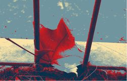 Bright maple leaf on the road& Stock Photography