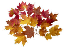 Bright maple leaf on a white background Stock Images