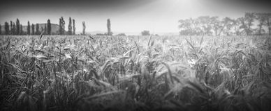 Bright midday light. Monochrome colors Stock Photography