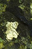 Bright mineral in volcanic stone. Bright mineral in volcanic peridoditic stone stock photography