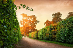 Bright moment of an overcast day. Green alley shrubs in autumn park and rusty sky Stock Photo