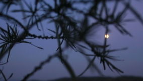 Bright moon shines on the dark evening sky.  stock video footage
