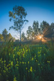 Bright morning green valley Royalty Free Stock Photo