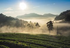 Bright morning, wind, fog, sunlight stock photography