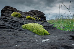 Bright Moss on Dark Stone. Juicy green moss on special black lava stone Stock Image