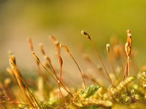Bright moss macro shot Stock Images