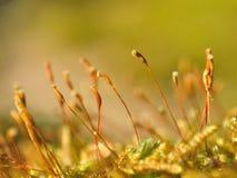 Bright moss macro shot stock images