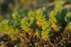 Bright moss macro shot stock image