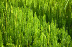 Bright Moss texture Stock Photos