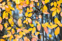 Bright motley foliage of plants and bushes Stock Images
