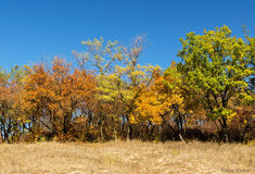 Bright multi-colored autumn trees Stock Photography