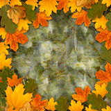 Bright multicolored autumn leaves on  abstract background Stock Photos