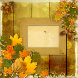 Bright multicolored autumn leaves on abstract background Stock Image