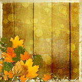 Bright multicolored autumn leaves on the abstract background Royalty Free Stock Photos