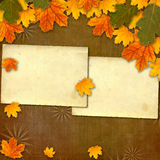 Bright multicolored autumn leaves on abstract background Stock Photography