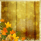 Bright multicolored autumn leaves on abstract beautiful background Royalty Free Stock Photos