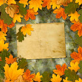 Bright multicolored autumn leaves on abstract beautiful background Stock Photography