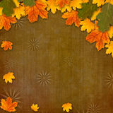Bright multicolored autumn leaves Stock Photos