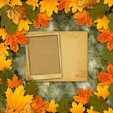 Bright multicolored autumn leaves on abstract beautiful background Royalty Free Stock Images